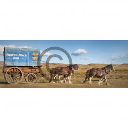 Speights Wagon