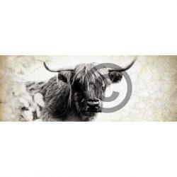 Highland Cow sepia