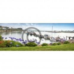 Riverton Harbour Agapanthas